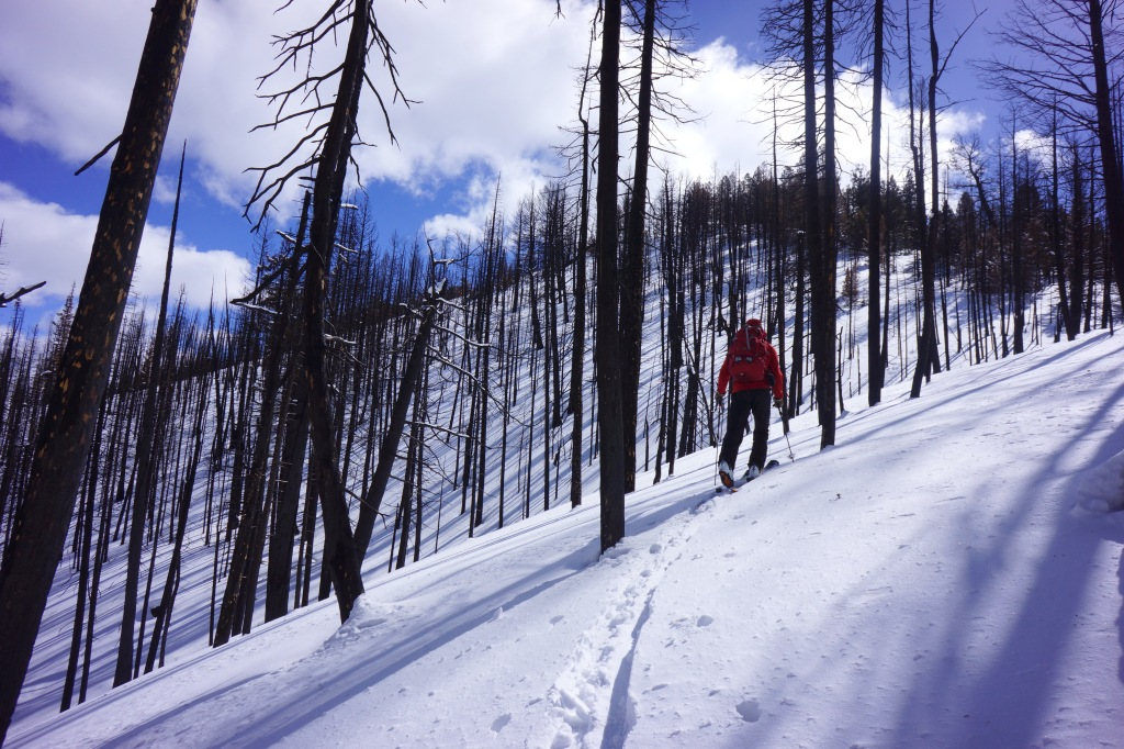 Patrick Graham skins up Fox Peak through the burn